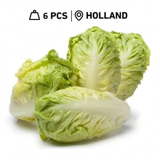 Fresh Dutch Small Round Lettuce (6 Pieces)