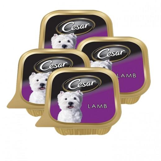 سيزار – طعام الكلاب البالغة مع لحم الغنم 6×100 جم