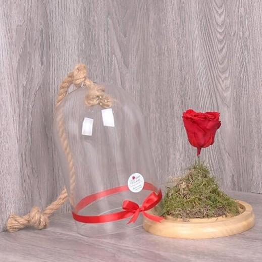 الزهرة الخالدة  - يتم التوصيل بواسطة Gate Of Flowers