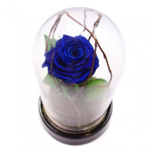 زهور مجففة - ورد ازرق