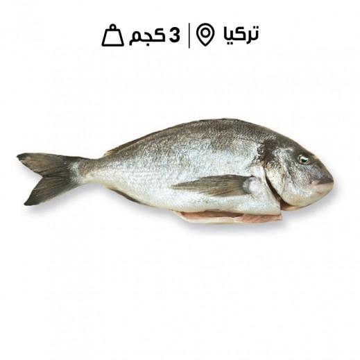 سمك الدنيس مُنظّف تركي طازج (3 كجم تقريباً)  - يتم التوصيل بواسطة سمك إكسبرس خلال 24 ساعة