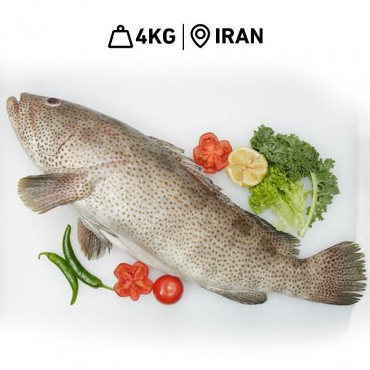 سمك هامور إيراني طازج (4 كجم تقريباً) - يتم التوصيل بواسطة سمك إكسبرس خلال 24 ساعة