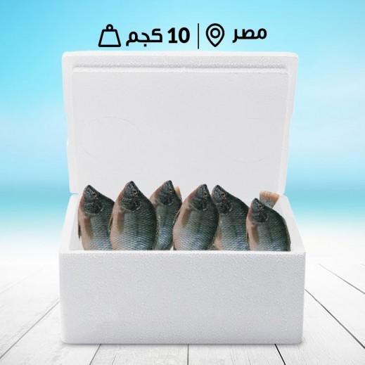سمك بلطي مصري طازج (كامل بالأمعاء) - صندوق 10 كجم  - يتم التوصيل بواسطة سمك إكسبرس خلال 24 ساعة