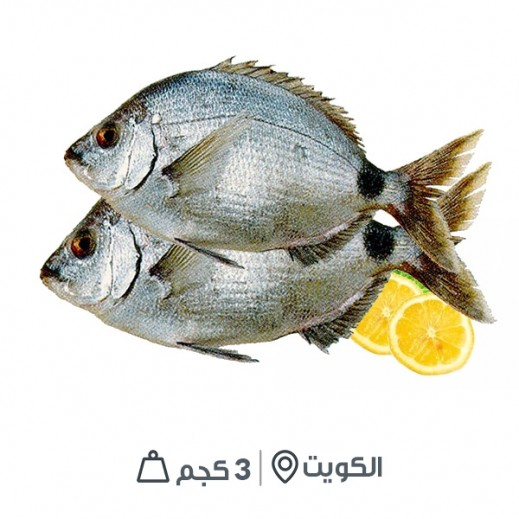سمك شعوم كويتي طازج 3 كجم تقريبا - يتم التوصيل بواسطة سمك إكسبرس خلال 24 ساعة