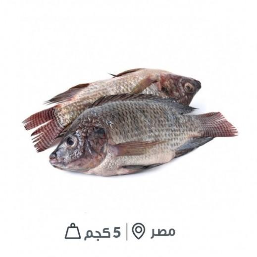 سمك بلطي مصري طازج (كامل بالأمعاء) - 5 كجم تقريباً  - يتم التوصيل بواسطة سمك إكسبرس خلال 24 ساعة