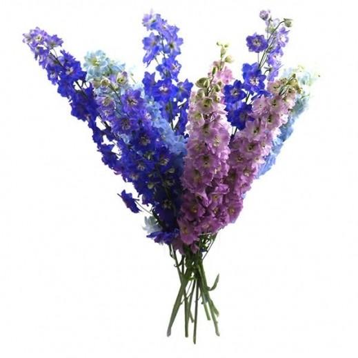 باقة ميكس من زهور الديلفينيوم - يتم التوصيل بواسطة ورود A&K