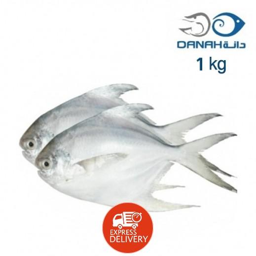 دانة - سمك الزبيدي المجمد حجم صغير 1 كجم